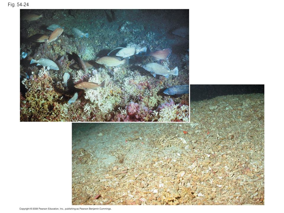 Fig Figure Disturbance of the ocean floor by trawling