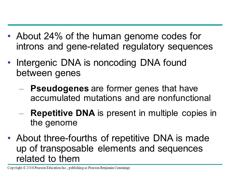Intergenic DNA is noncoding DNA found between genes