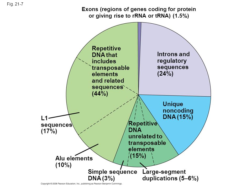 Repetitive DNA that includes transposable elements and related