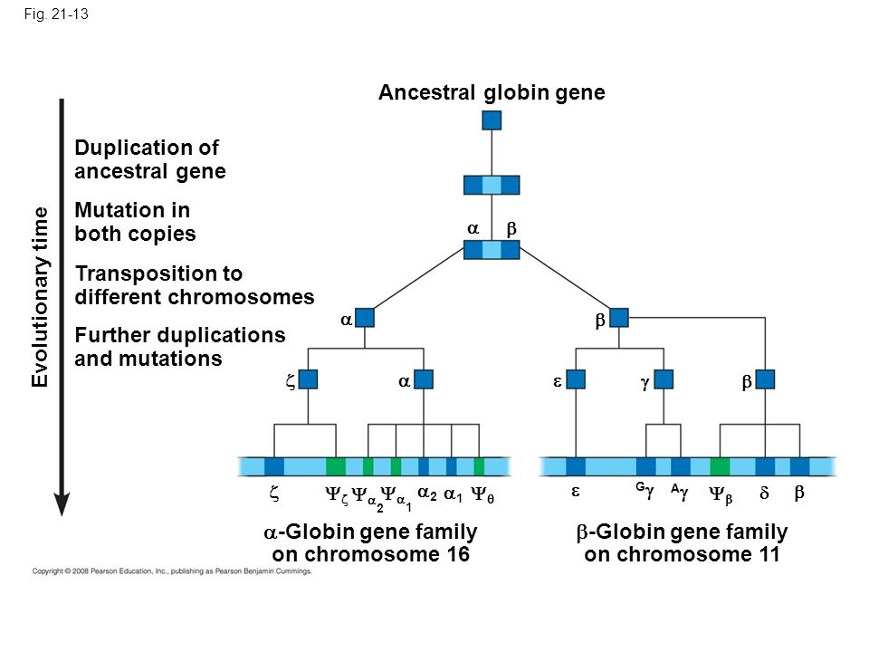 different chromosomes Evolutionary time