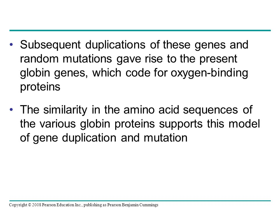 Subsequent duplications of these genes and random mutations gave rise to the present globin genes, which code for oxygen-binding proteins