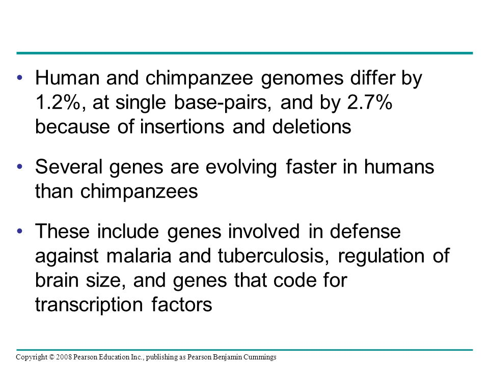 Human and chimpanzee genomes differ by 1