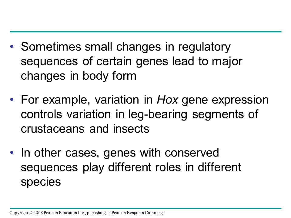 Sometimes small changes in regulatory sequences of certain genes lead to major changes in body form