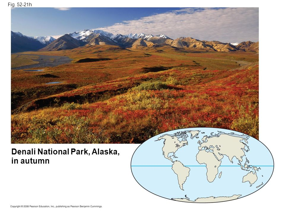 Denali National Park, Alaska, in autumn