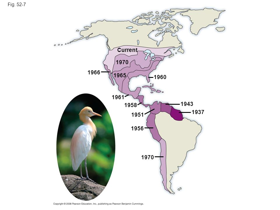 Fig. 52-7 Current. 1970. 1966. 1965. 1960. 1961. 1958. 1943. 1937. 1951. 1956. Figure 52.7 Dispersal of the cattle egret in the Americas.