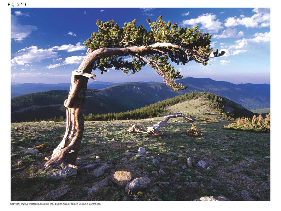 Fig. 52-9 Figure 52.9 Alpine tree
