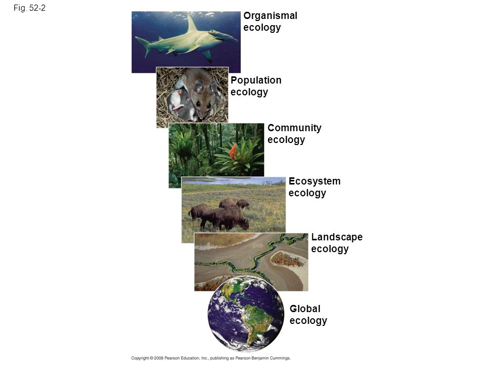 Organismal ecology Population ecology Community ecology Ecosystem
