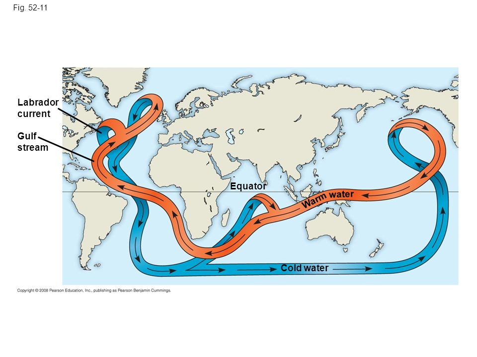 Labrador current Gulf stream Equator water Warm Cold water Fig. 52-11