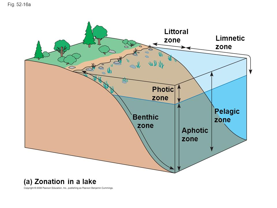 Littoral zone Limnetic zone Photic zone Pelagic zone Benthic zone