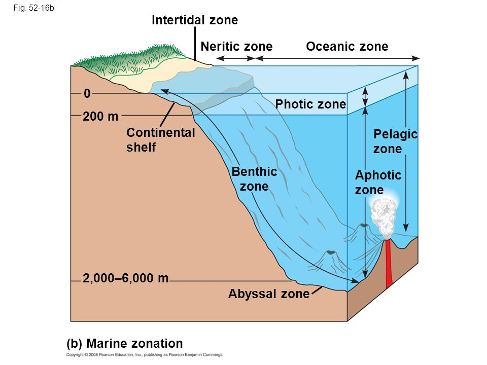 Intertidal zone Neritic zone Oceanic zone Photic zone 200 m