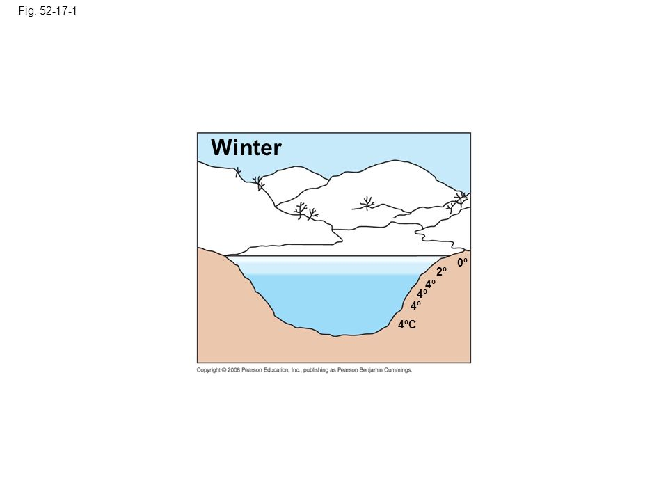 Fig Winter. 0º. 2º. 4º. 4º. 4º. Figure Seasonal turnover in lakes with winter ice cover.
