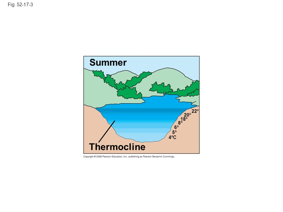 Summer Thermocline Fig. 52-17-3 22º 20º 18º 8º 6º 5º