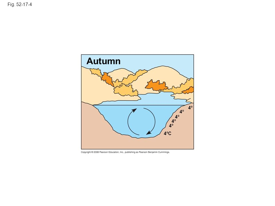 Fig Autumn. 4º. 4º. 4º. 4º. 4º. Figure Seasonal turnover in lakes with winter ice cover.