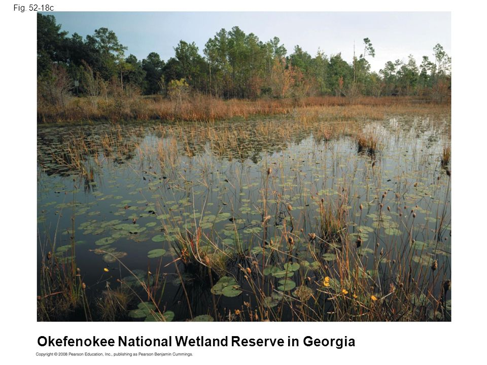 Okefenokee National Wetland Reserve in Georgia