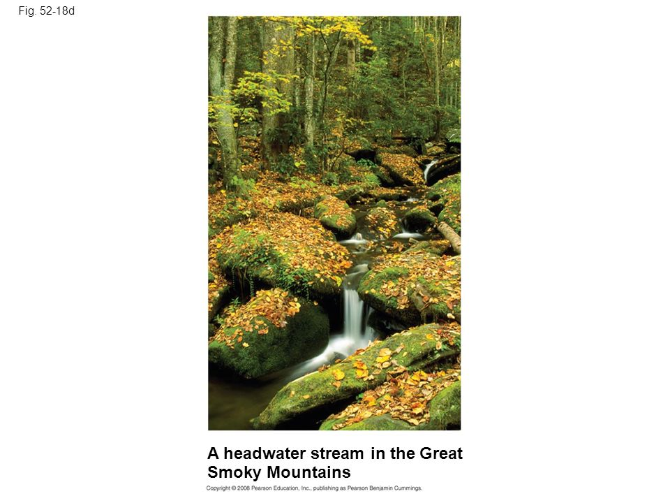 A headwater stream in the Great Smoky Mountains