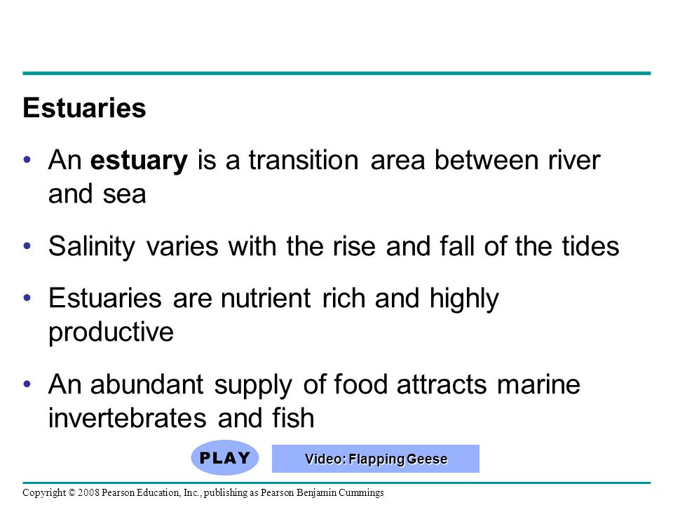 An estuary is a transition area between river and sea