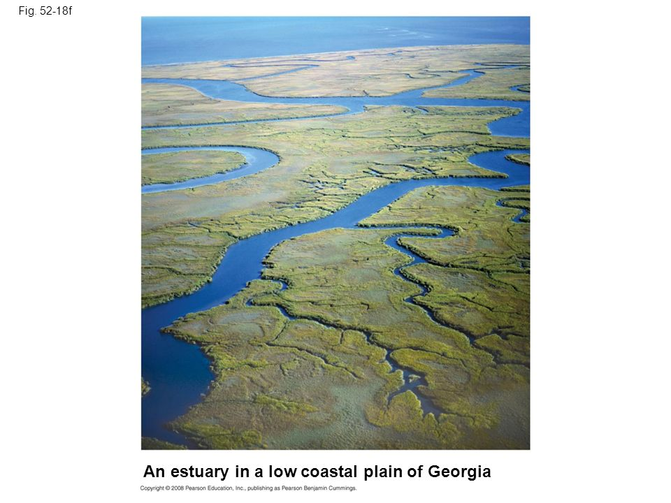 An estuary in a low coastal plain of Georgia