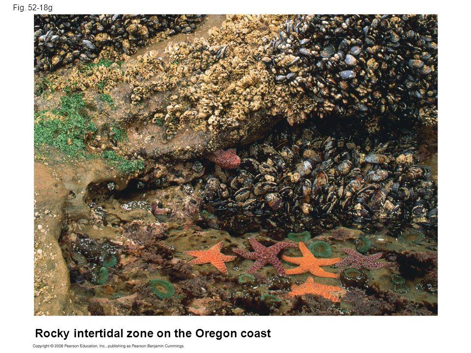 Rocky intertidal zone on the Oregon coast