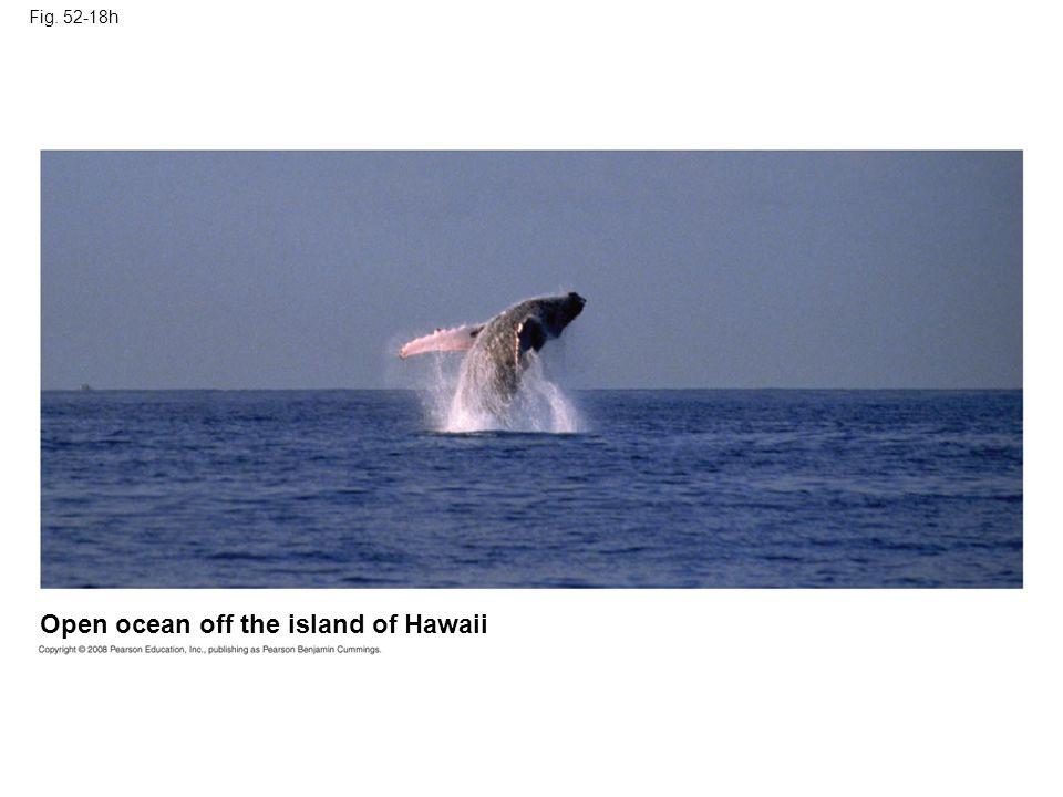 Open ocean off the island of Hawaii