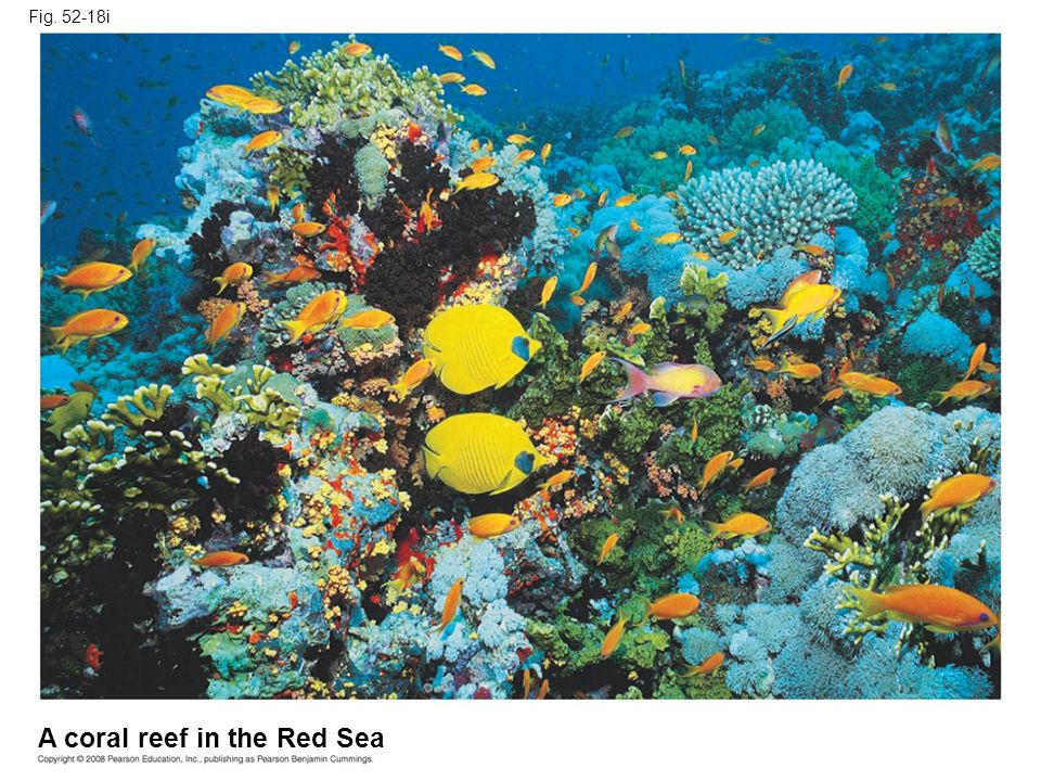 A coral reef in the Red Sea