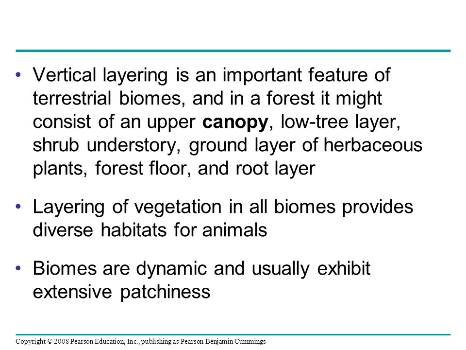 Vertical layering is an important feature of terrestrial biomes, and in a forest it might consist of an upper canopy, low-tree layer, shrub understory, ground layer of herbaceous plants, forest floor, and root layer