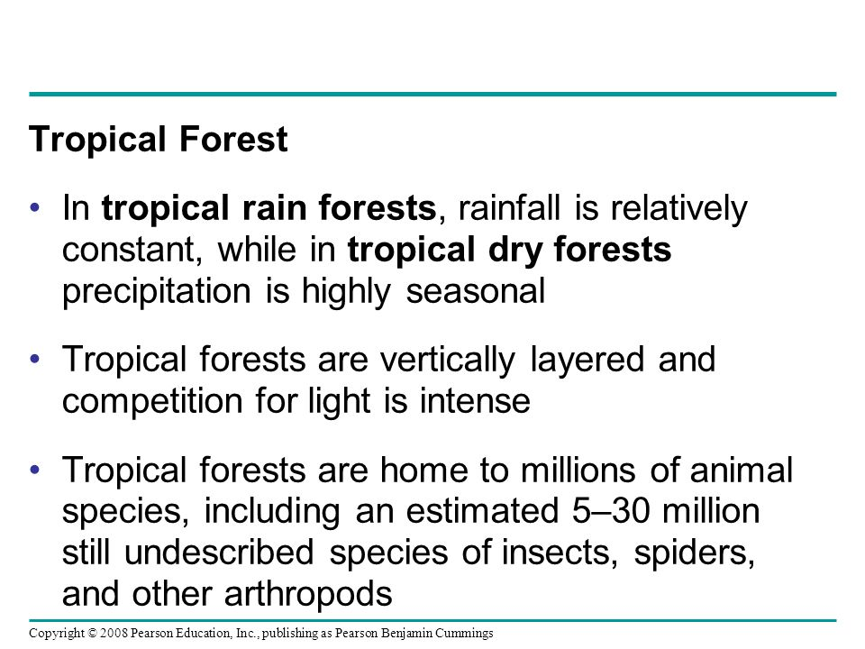 Tropical Forest In tropical rain forests, rainfall is relatively constant, while in tropical dry forests precipitation is highly seasonal.