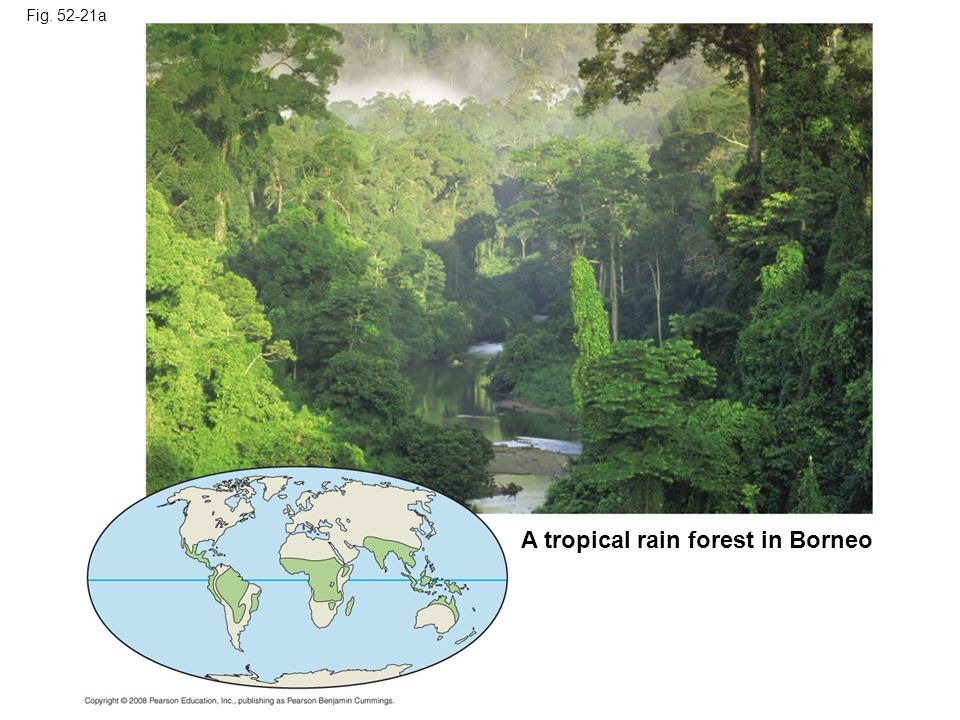 A tropical rain forest in Borneo