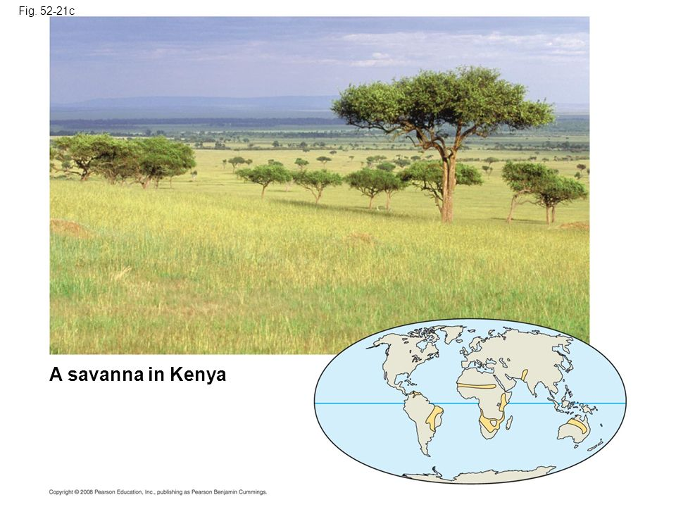 Fig c Figure Terrestrial biomes A savanna in Kenya