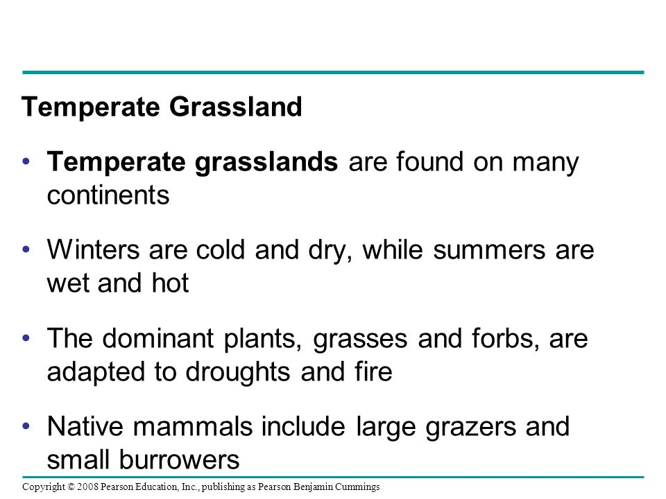 Temperate Grassland Temperate grasslands are found on many continents. Winters are cold and dry, while summers are wet and hot.