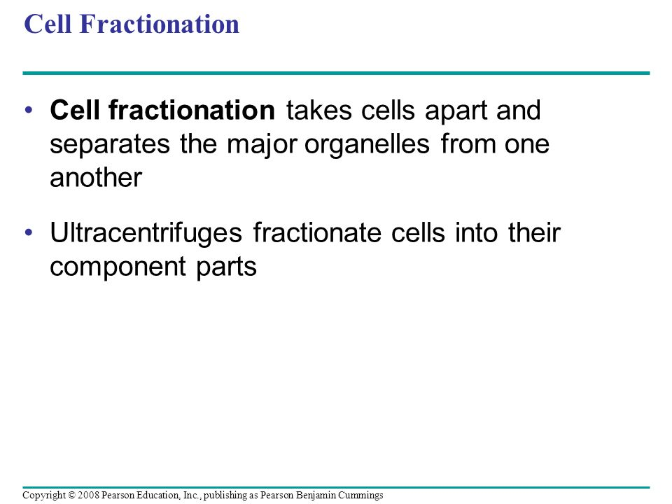 Ultracentrifuges fractionate cells into their component parts