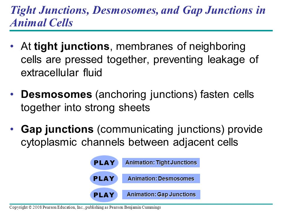 Tight Junctions, Desmosomes, and Gap Junctions in Animal Cells