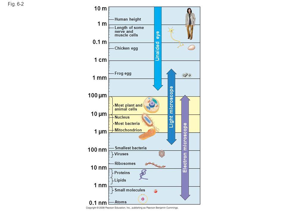 10 m 1 m 0.1 m 1 cm 1 mm 100 µm 10 µm 1 µm 100 nm 10 nm 1 nm 0.1 nm