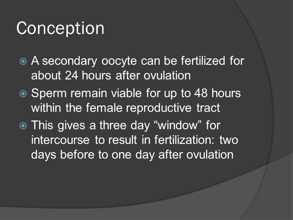 Conception A secondary oocyte can be fertilized for about 24 hours after ovulation.