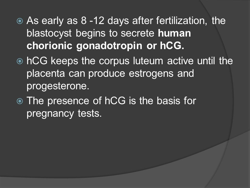As early as days after fertilization, the blastocyst begins to secrete human chorionic gonadotropin or hCG.