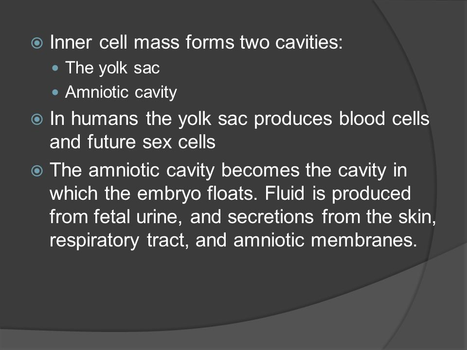 Inner cell mass forms two cavities:
