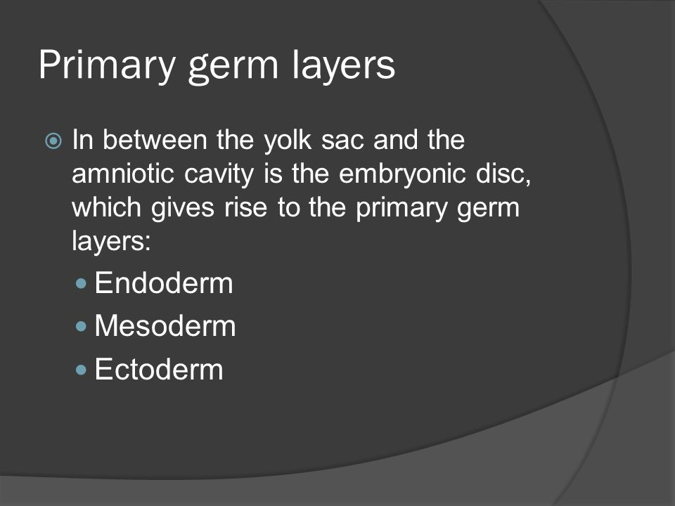 Primary germ layers Endoderm Mesoderm Ectoderm