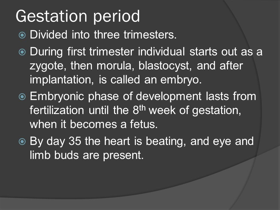 Gestation period Divided into three trimesters.