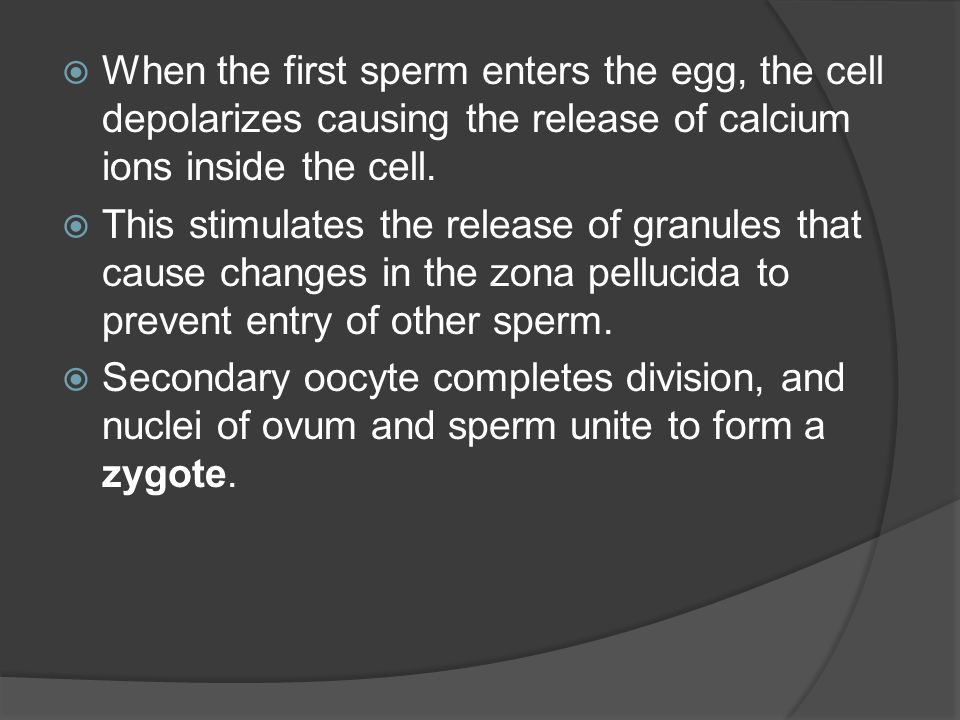 When the first sperm enters the egg, the cell depolarizes causing the release of calcium ions inside the cell.