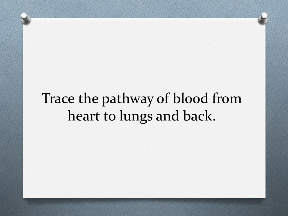 Trace the pathway of blood from heart to lungs and back.
