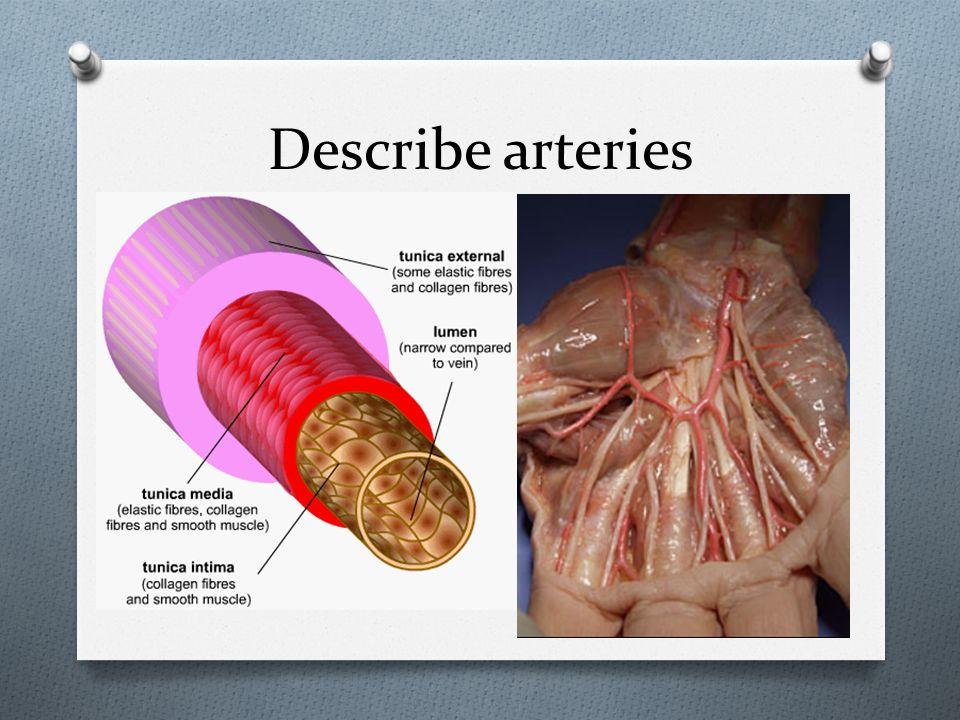 Describe arteries