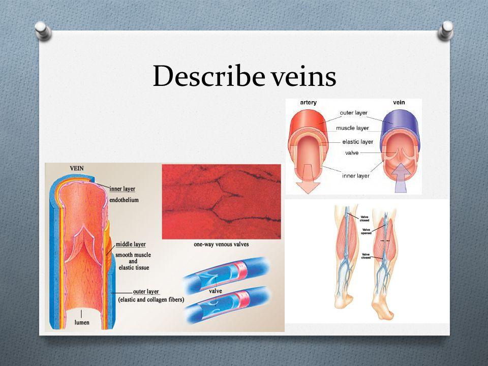 Describe veins