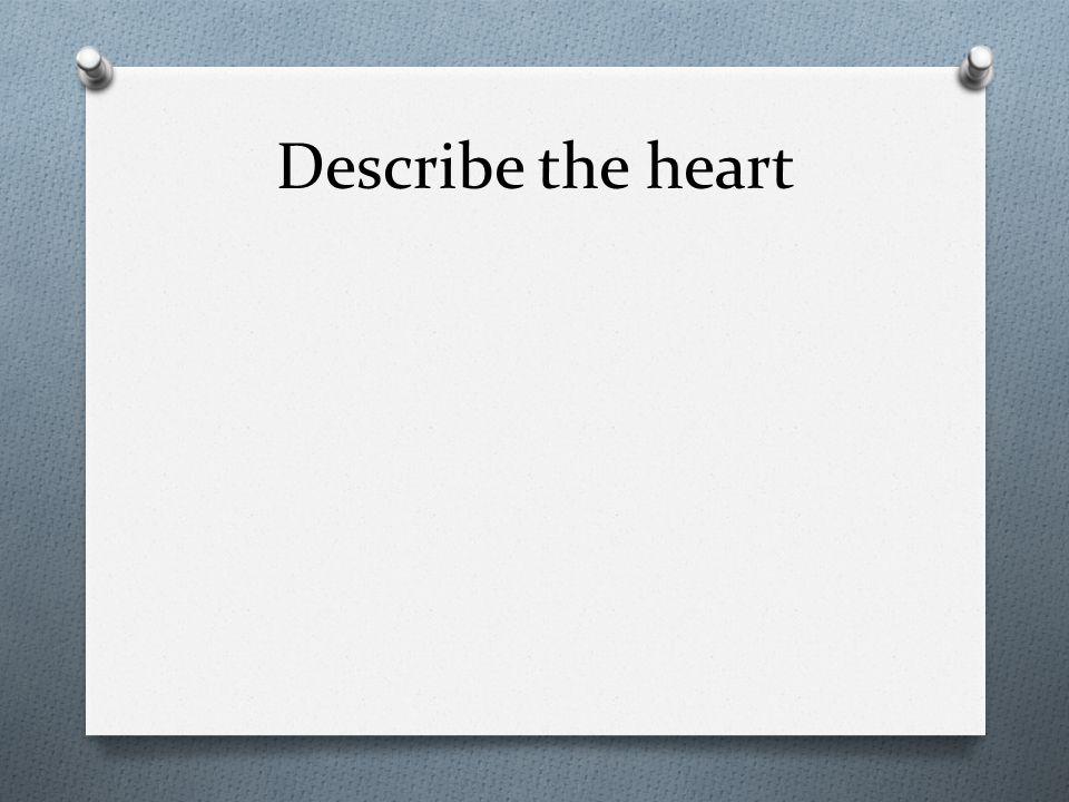 Describe the heart