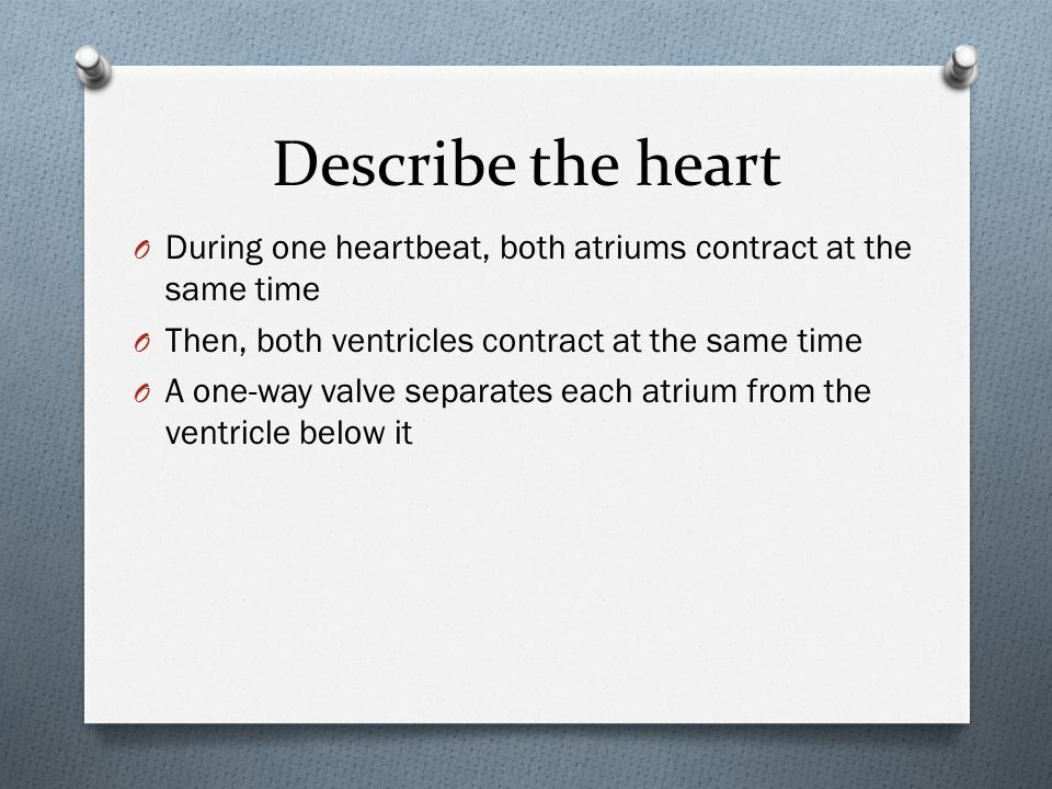 Describe the heart During one heartbeat, both atriums contract at the same time. Then, both ventricles contract at the same time.