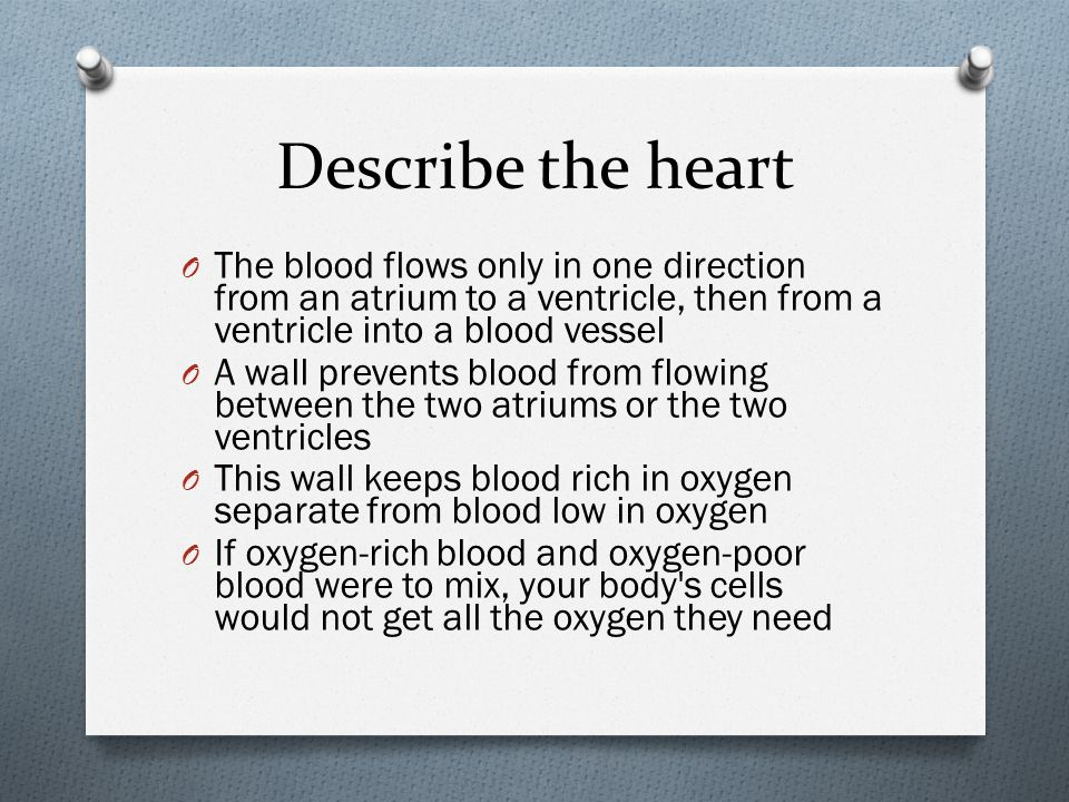 Describe the heart The blood flows only in one direction from an atrium to a ventricle, then from a ventricle into a blood vessel.