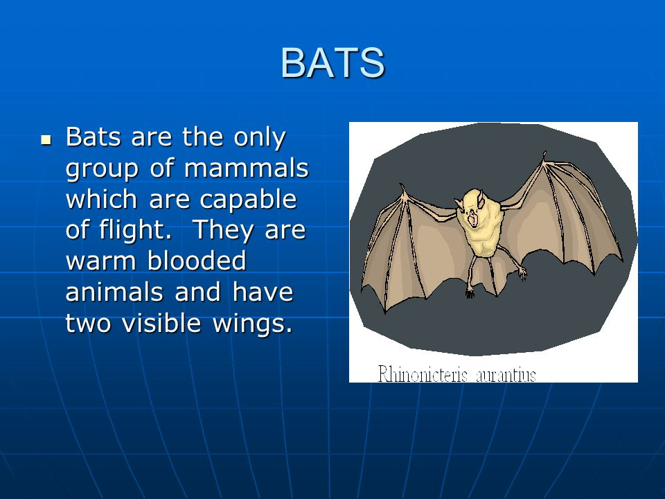 BATS Bats are the only group of mammals which are capable of flight.