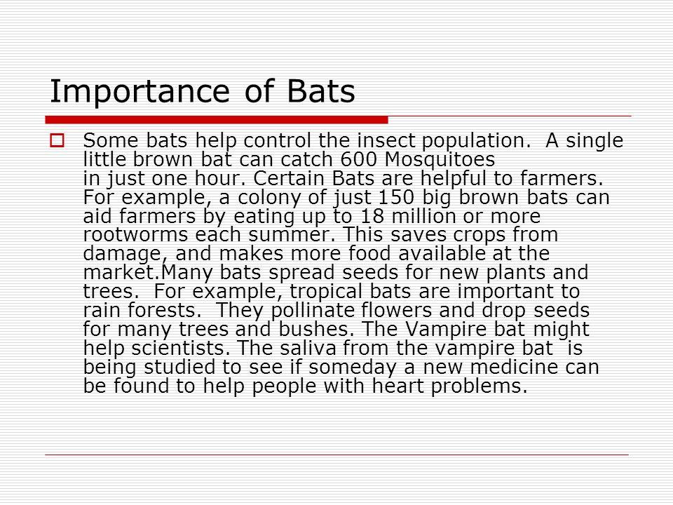 Importance of Bats