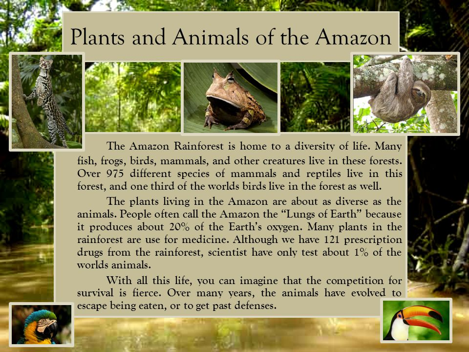 Plants and Animals of the Amazon