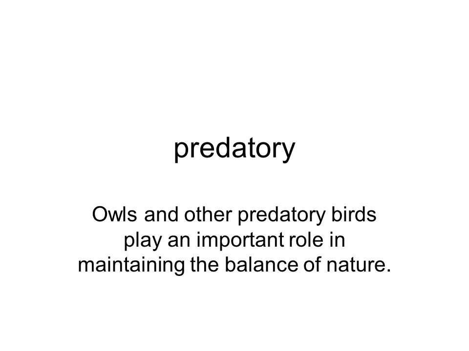 predatory Owls and other predatory birds play an important role in maintaining the balance of nature.