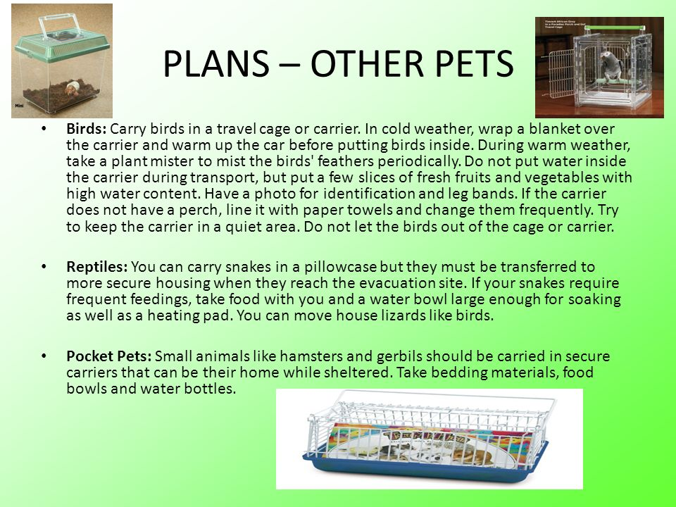 PLANS – OTHER PETS