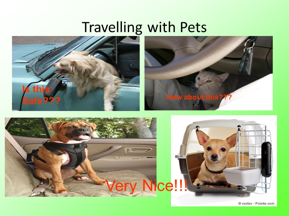 Travelling with Pets Very Nice!!! Is this Safe How about this